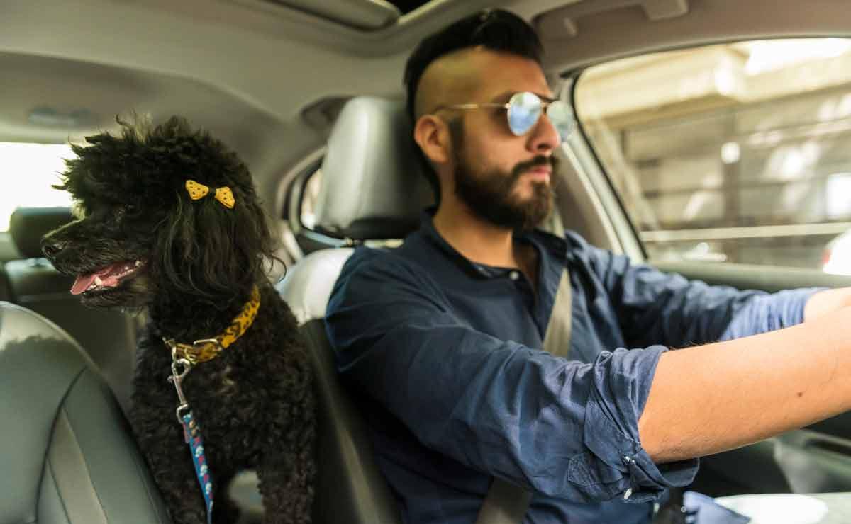 como-viajar-en-el-auto-con-tu-mascota-3